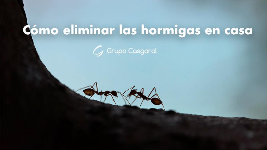 Cómo eliminar las hormigas de casa